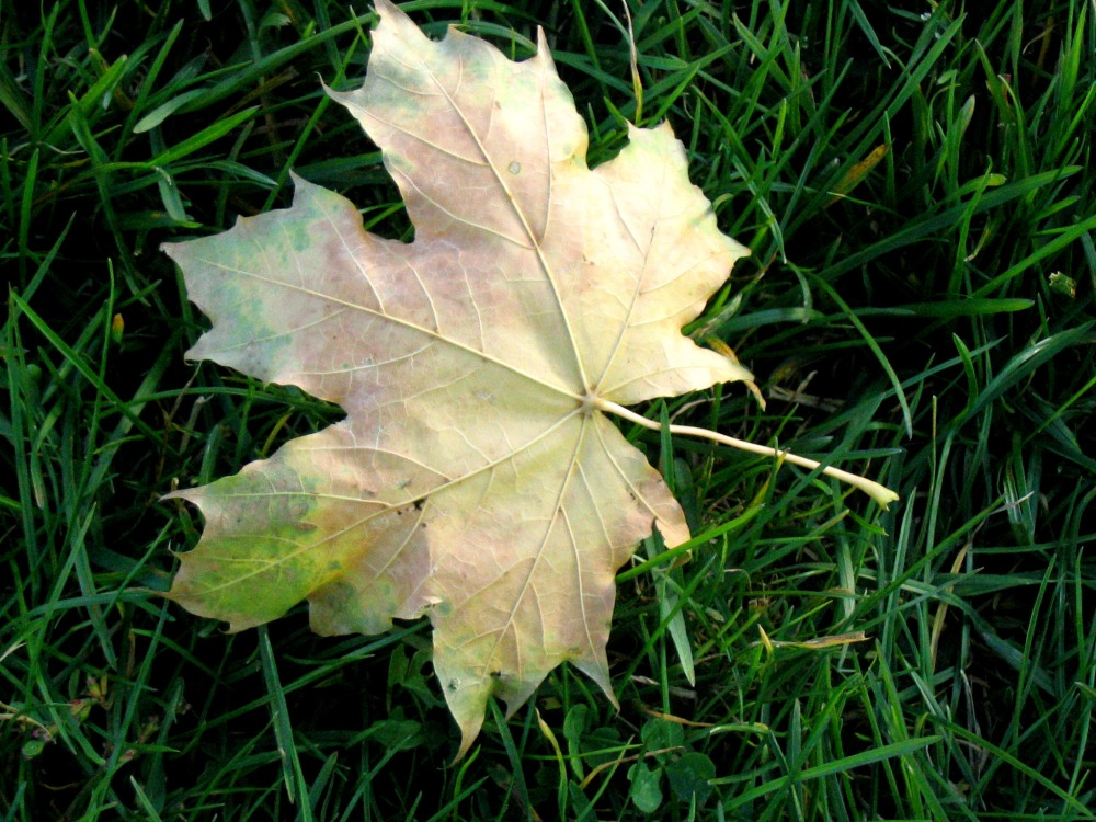 autumn-1399396