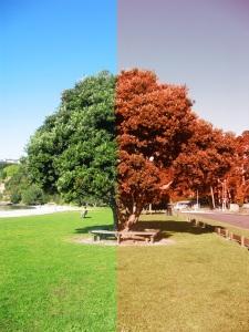 tree-of-change-1-1351100-639x852