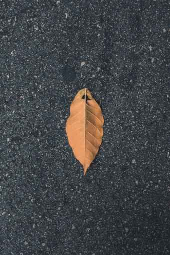brown single leaf on tarmacked road