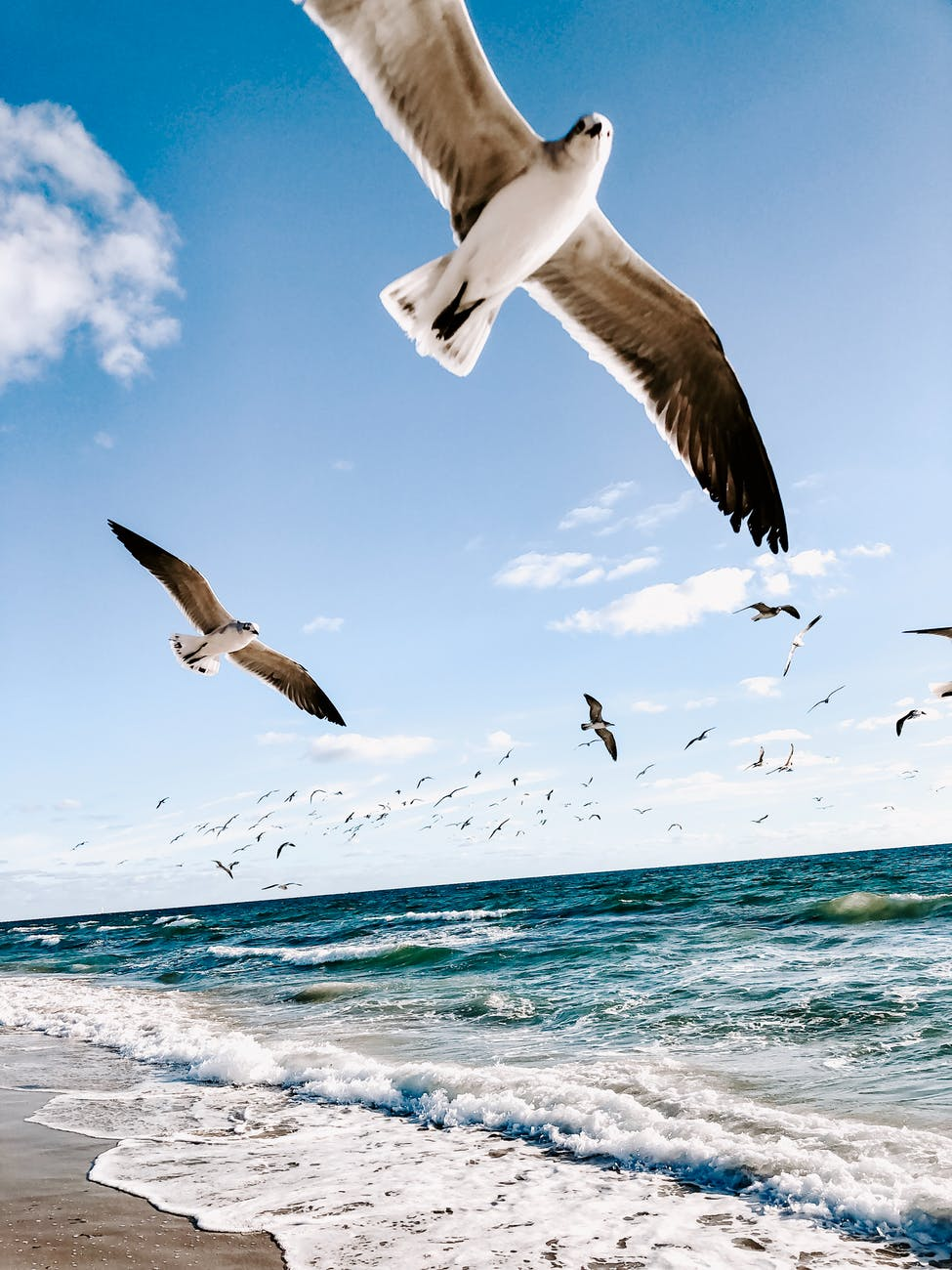 seagulls flying over beach